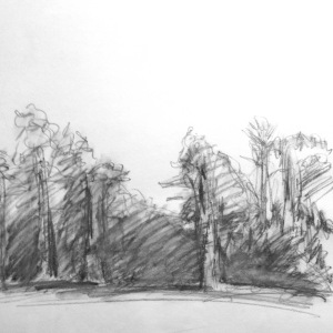 "9"" x 12"" graphite on paper"